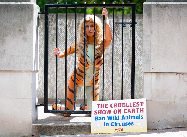 Chantelle Houghton poses in tiger body paint outside the Houses of Parliament, central London, to join a PETA protest calling for a ban on wild animals in circuses.
