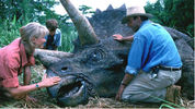 Jurassic Park returns to cinemas for an IMAX 3D re-release in 2013.