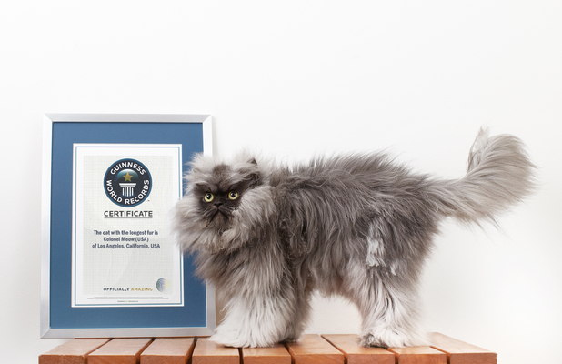 Colonel Meow in Guinness World Records