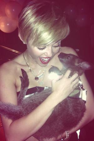 Miley Cyrus cuddles a wallaby