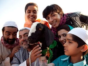 The star of Yeh Hai Bakrapur, Shahrukh the goat