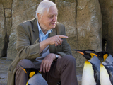 David Attenborough's Natural Curiosities - episode 7, 'Life on Ice'