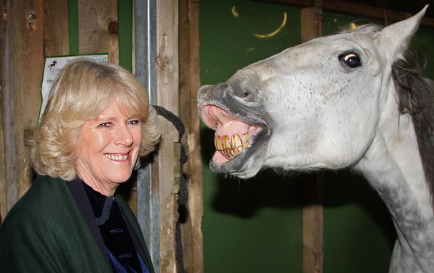 The Duchess of Cornwall tours the stables backstage at Olympia, The London International Horse Show. Picture date: Thursday December 17, 2008. Photo credit should read: Chris Jackson/PA Wire