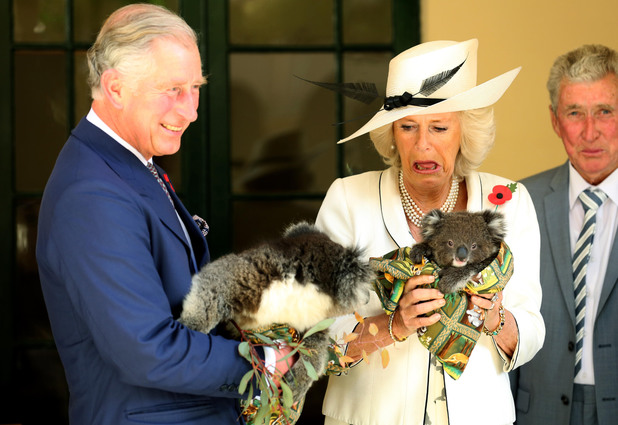 The Prince of Wales, and The Duchess of Cornwall hold Koalas at Government House in Adelaide, Australia. Picture date Wednesday November 7th 2012. See PA Story ROYAL Jubilee. Photo credit should read Chris Radburn/PA