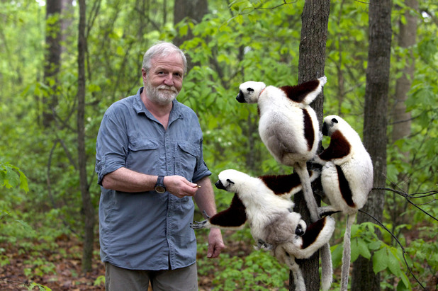 Dr George McGavin with a group of sifakas on Monkey Planet