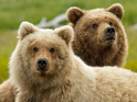 Disneynature will release documentary Bears in the US on Earth Day.