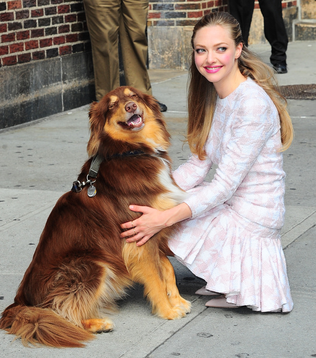 NEW YORK, NY - JULY 30: Actress Amanda Seyfried with her dog visits 'Late Show With David Letterman' at Ed Sullivan Theater on July 30, 2013 in New York City. (Photo by Raymond Hall/FilmMagic)
