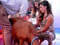 Nicole Scherzinger milks Betty the goat on the Capital Breakfast show
