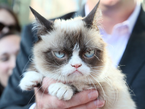Grumpy Cat attends 'The Grumpy Guide to Life: Observations by Grumpy Cat' book launch party.