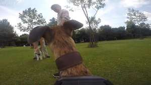 We tried out the GoPro Hero 3+ by strapping it to the back of our Tech Editor's dog!