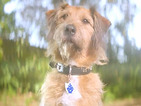 CBBC launches Blue Peter attitude advert campaign