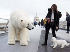 Fortitude: Polar bear roams London to promote Sky series