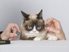 "Grumpy Cat becomes the first ever Madame Tussauds cat: ""This is truly an honour... I hate it"""