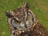 160x120 cultspy owls